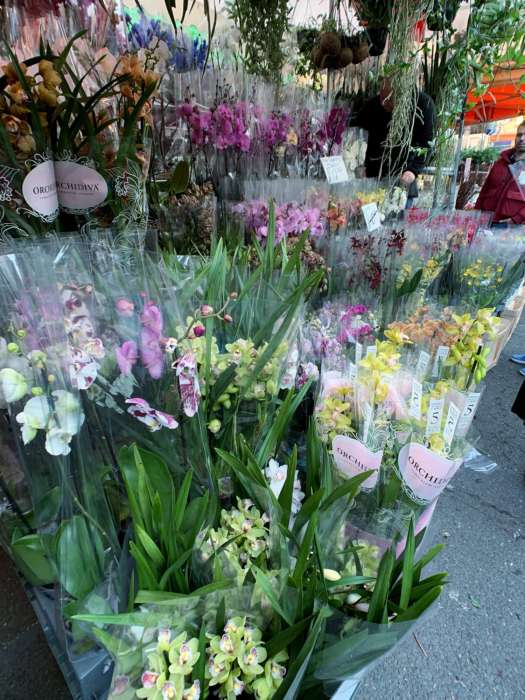 Columbia-road-flower-market_08